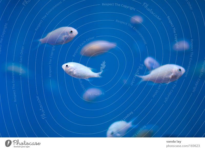 Water White Ocean Blue Animal Elegant Free Fish Deep Aquarium Exotic Fishing (Angle) Flock Scales