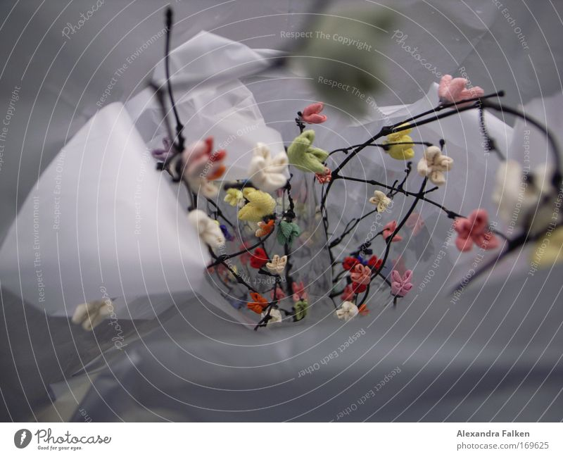 Beautiful Esthetic Decoration Macro (Extreme close-up) Plastic bag Twigs and branches Silk flower