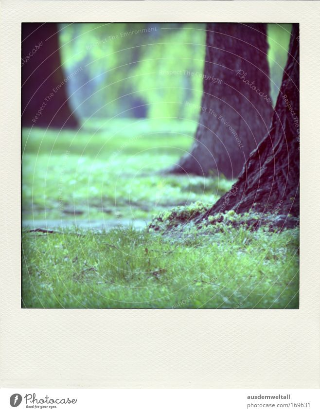 park Colour photo Multicoloured Exterior shot Close-up Polaroid Deserted Day Environment Nature Landscape Spring Beautiful weather Plant Tree Grass Park Meadow