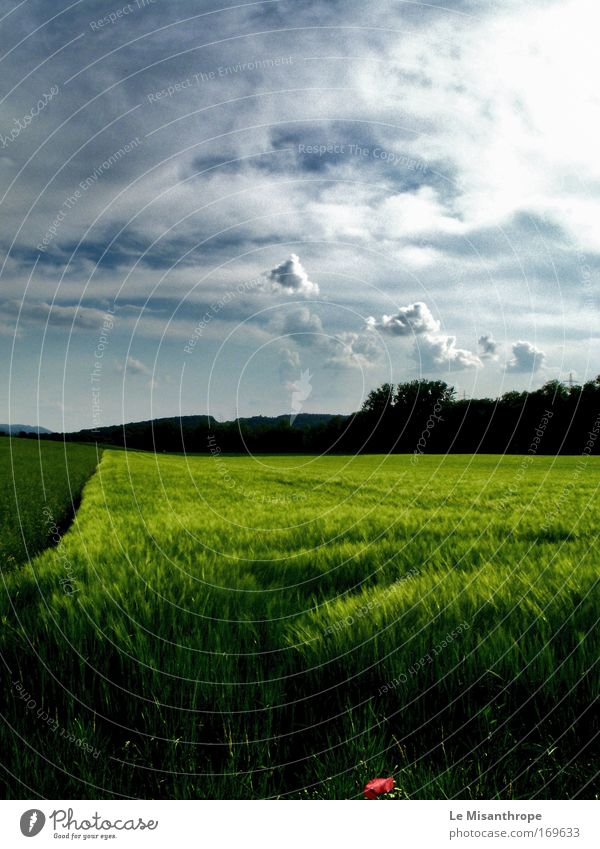White Green Summer Calm Black Clouds Loneliness Colour Life Grass Dream Think Landscape Contentment Bright Power