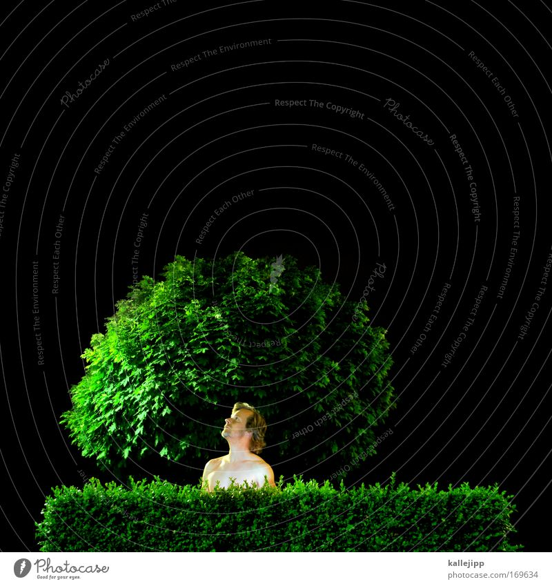 Human being Man Nature Tree Green Leaf Black Naked Garden Park Bushes Climate Education Shows Observe Treetop