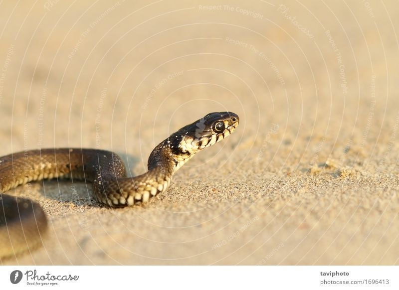 grass snake on sandy beach Nature Youth (Young adults) Summer Beautiful Animal Beach Life Grass Small Sand Wild Fear Ground Living thing Curve Crawl