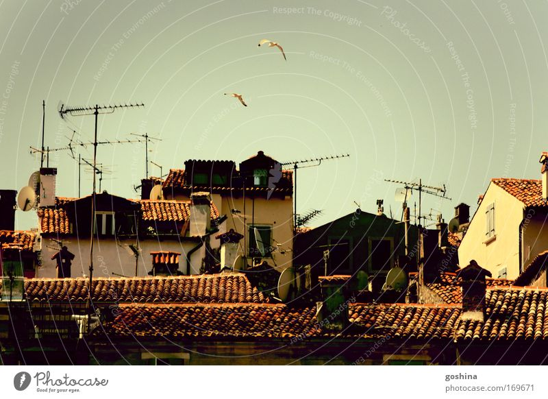 Vacation & Travel House (Residential Structure) Far-off places Pair of animals Flying Trip In pairs Tourism Roof Idyll Hut Chimney Antenna Sightseeing