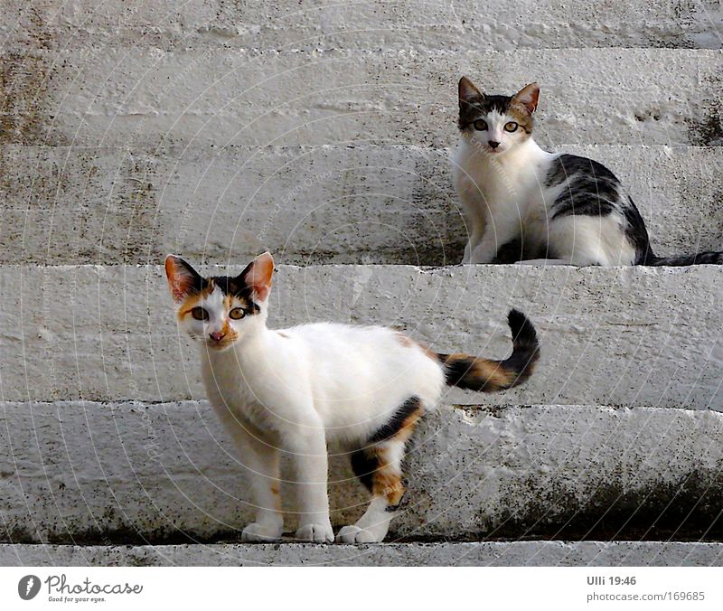 Cat Beautiful Summer White Animal Baby animal Gray Brown Stairs Stand Pair of animals In pairs Wait Joie de vivre (Vitality) Observe Cute