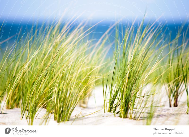 Green by the sea Environment Nature Landscape Plant Sand Water Sky Spring Beautiful weather Wind Warmth Grass Bushes Foliage plant Coast Beach Baltic Sea Ocean