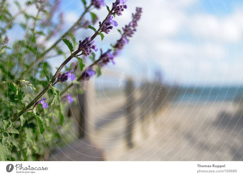 Nature Water Sky Ocean Flower Green Plant Summer Beach Vacation & Travel Clouds Spring Freedom Sand Landscape