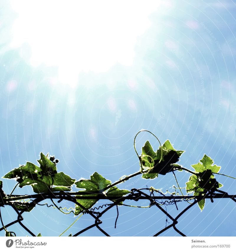Sky Nature Beautiful Plant Sun Vacation & Travel Summer Leaf Colour Environment Warmth Horizon Modern Climate Hot Fence