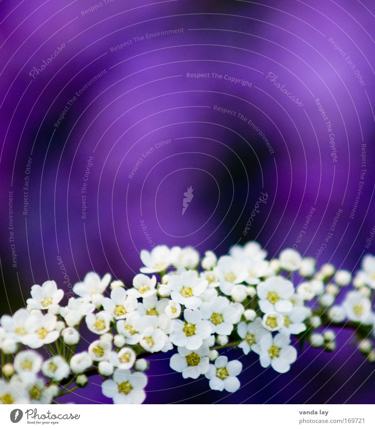 purple Colour photo Deserted Copy Space top Copy Space middle Shallow depth of field Mother's Day Environment Nature Plant Blossom Blossoming Dream Happiness