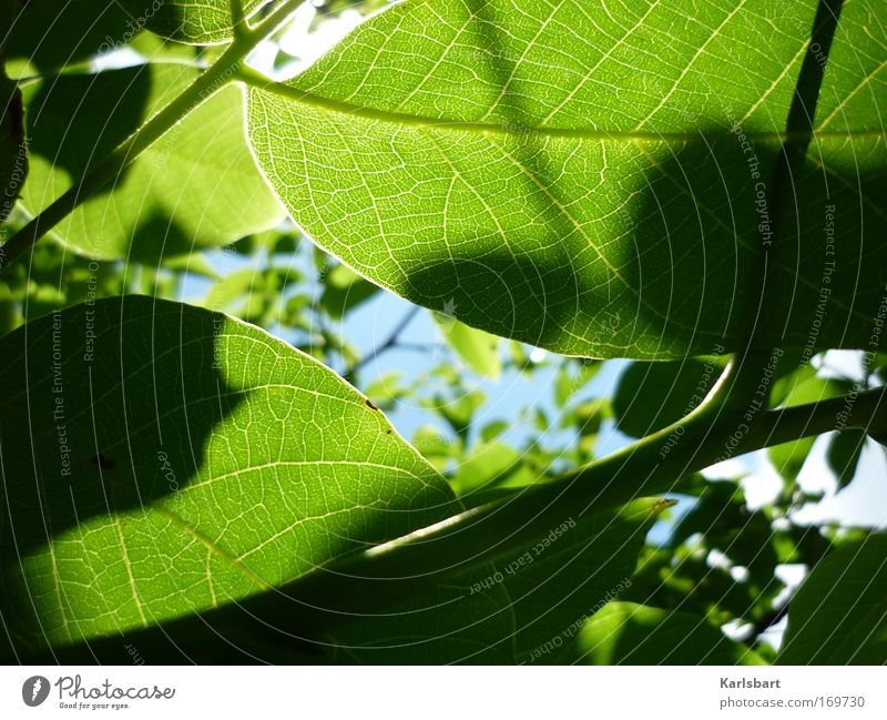 between. the branches. two shadows. Design Life Harmonious Relaxation Gardening Environment Nature Plant Sky Sunlight Spring Summer Beautiful weather Leaf Park