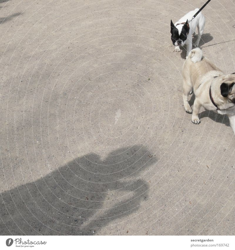 doggy style. Black & white photo Exterior shot Close-up Copy Space left Copy Space top Copy Space bottom Copy Space middle Neutral Background Morning Day Shadow