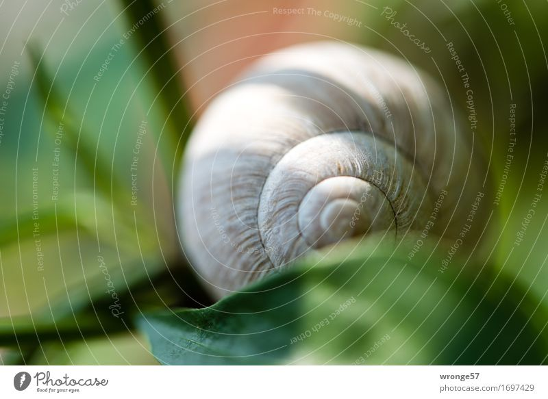 snail shell Snail Snail shell Natural Round Brown Gray Green Empty Garden Leaf Light and shadow Close-up Macro (Extreme close-up) Colour photo Multicoloured