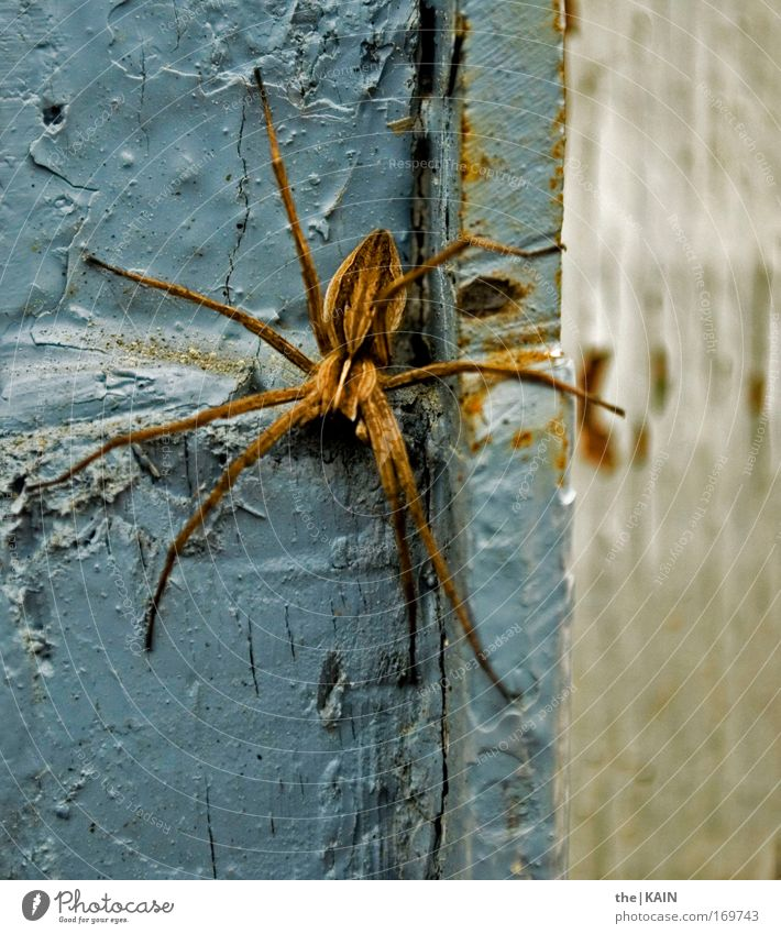 Fie! Spider! Colour photo Subdued colour Exterior shot Close-up Detail Pattern Structures and shapes Contrast Profile Animal Wild animal 1 Movement Going Hang