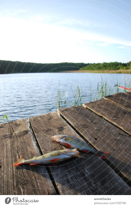 Sky Summer Animal Relaxation Landscape Lake Wild animal Leisure and hobbies Food Success Nutrition Fish Beautiful weather Fish River Lakeside
