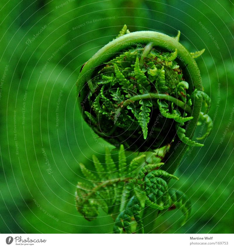 Nature Green Plant Meadow Spring Park Safety (feeling of) Insulation Coil Fern Fern leaf