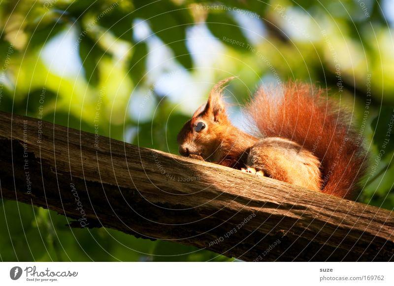 Nature Beautiful Plant Tree Landscape Leaf Animal Environment Garden Park Sit Wild animal Observe Cute Branch Pelt