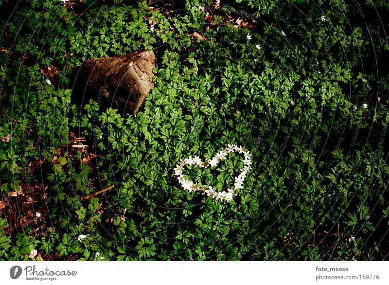 Forest Love Nature Green Beautiful Joy Love Emotions Stone Sadness Dream Friendship Heart Natural Happiness Lifestyle Romance Lovesickness