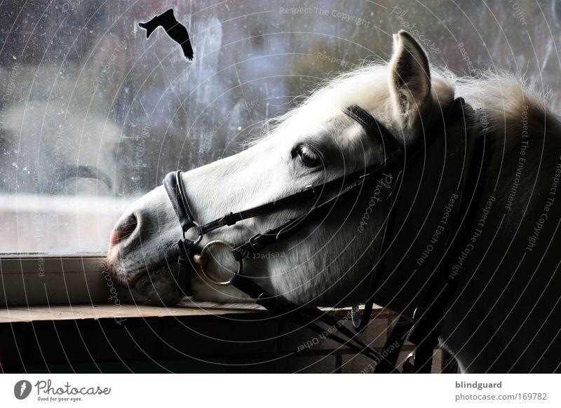 Calm Loneliness Animal Eyes Dream Sadness Bird Dirty Horse Hope Ear Longing Curiosity Boredom Stationery Long-haired