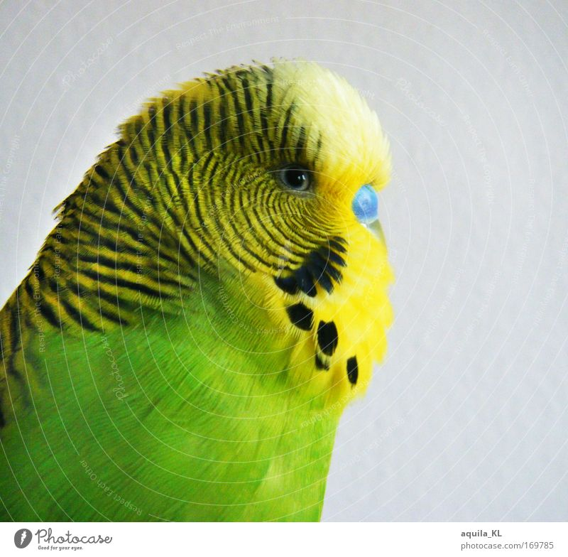 professional model Colour photo Multicoloured Interior shot Looking Looking into the camera Animal Pet Wild animal Bird Animal face Wing Zoo 1 Happiness