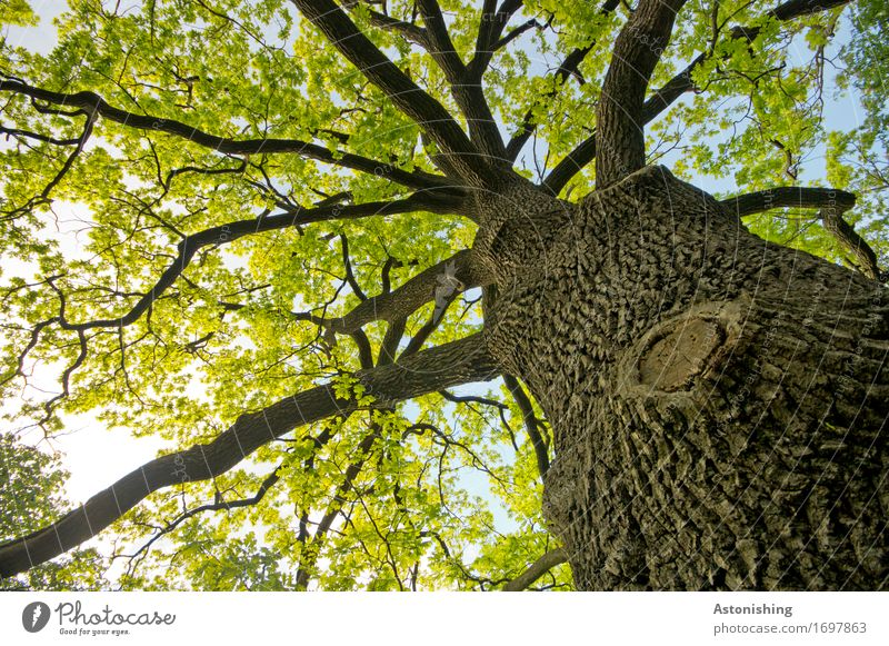 big tree Environment Nature Landscape Plant Air Sky Sun Summer Weather Beautiful weather Tree Leaf Park Forest Vienna Austria Wood Old Large Hot Tall Brown