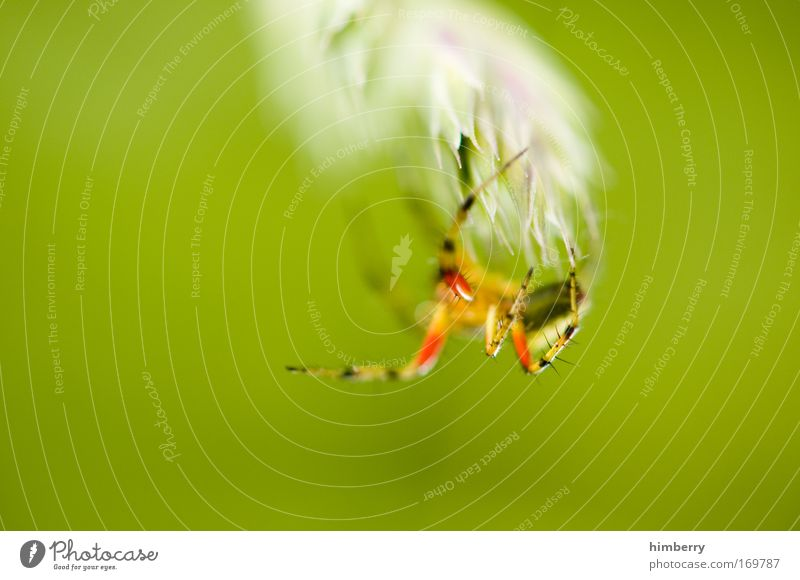 Nature Plant Animal Emotions Environment Information Technology Park Fear Network Threat Wild animal Curiosity Fantastic Fear of death Computer network Craft (trade)