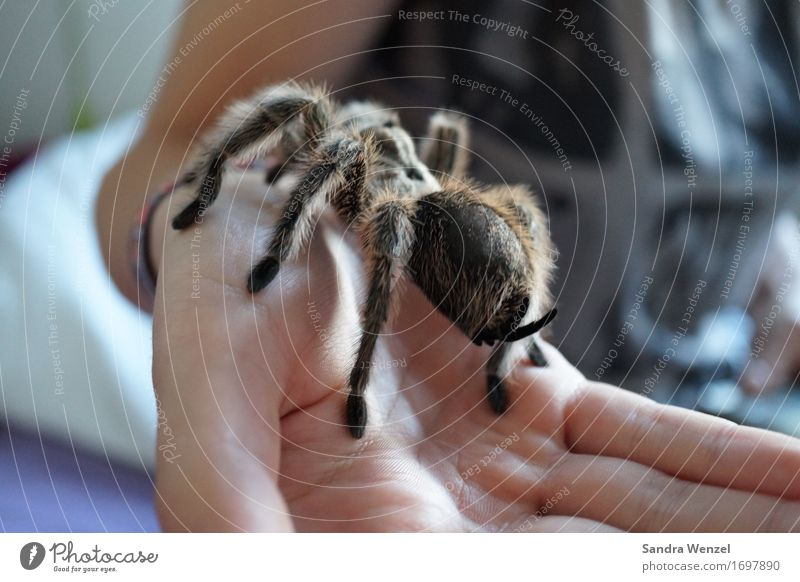 Spider 4 Stopper Short-haired Pelt Movement Discover To hold on To feed Crouch Disgust Crawl Spider legs Insect Virgin forest Australia Africa Climate change