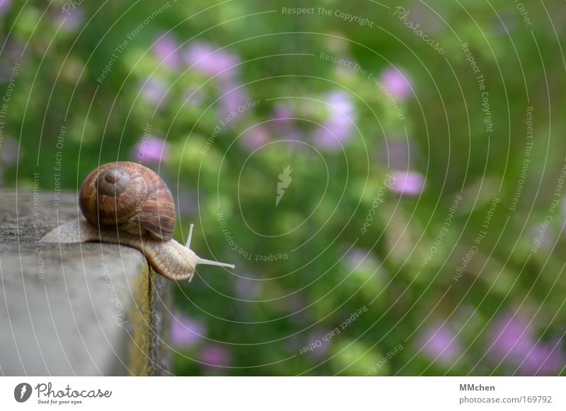 Nature Vacation & Travel Summer Animal Environment Freedom Movement Stone Dream Park Flat (apartment) Speed Serene Snail Optimism Expedition