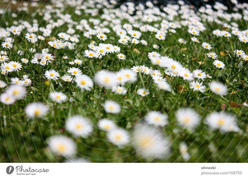 Nature White Flower Green Plant Summer Yellow Life Meadow Blossom Grass Happy Kitsch Joie de vivre (Vitality) Infinity Friendliness