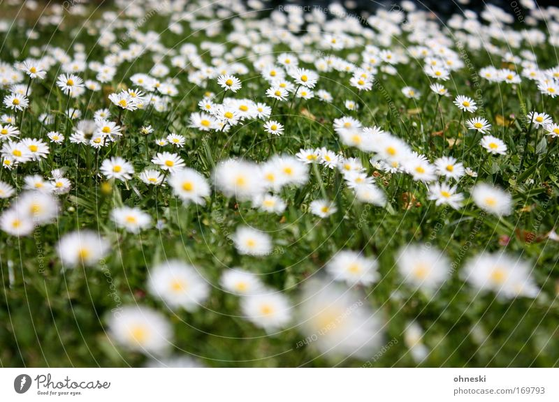 summer lawn Colour photo Multicoloured Pattern Sunlight Blur Nature Plant Summer Beautiful weather Flower Grass Blossom Daisy Meadow Friendliness Happy Infinity