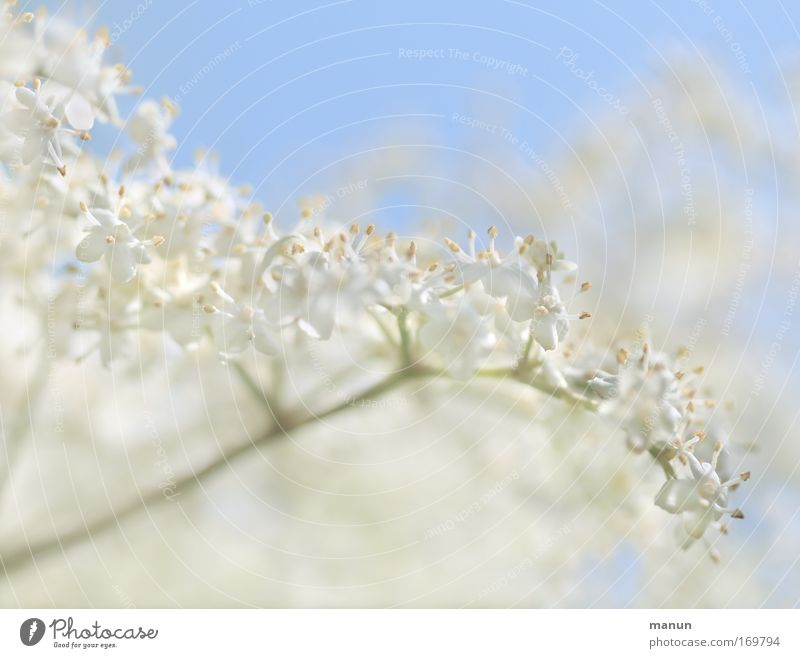 Nature White Summer Plant Spring Blossom Style Healthy Natural Food Design Nutrition Esthetic Pattern Well-being Fragrance