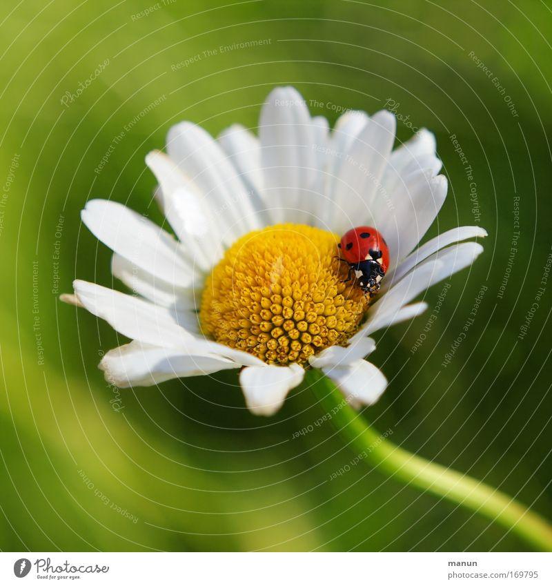 Nature Flower Plant Summer Animal Emotions Blossom Spring Happy Contentment Design Success Hope Happiness Esthetic Joie de vivre (Vitality)