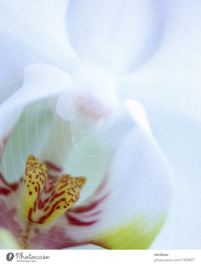 """Say """"AAAAHHHHH""""! Close-up Macro (Extreme close-up) Plant Flower Orchid Blossom Exotic Blossoming Fragrance To enjoy Esthetic Beautiful Clean Yellow Red Silver"""