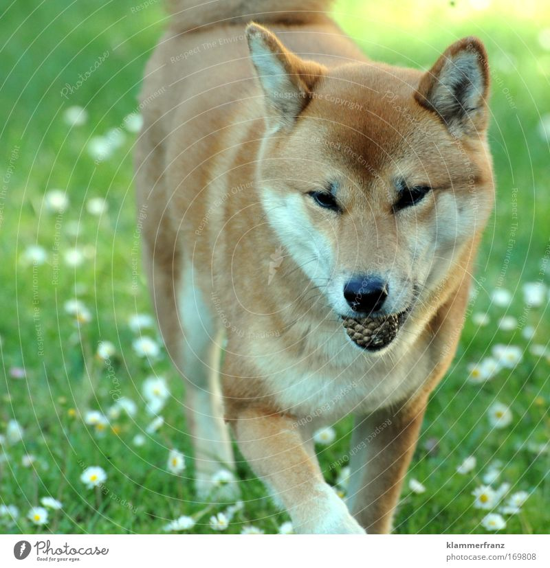 Nature Joy Animal Playing Grass Happy Dog Contentment Going Walking Success Free Happiness Target Joie de vivre (Vitality) Hunting