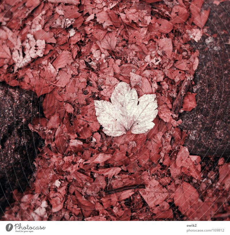Nature Plant Red Leaf Environment Sadness Autumn Emotions Death Stone Pink Lie Earth Gloomy Wait Transience