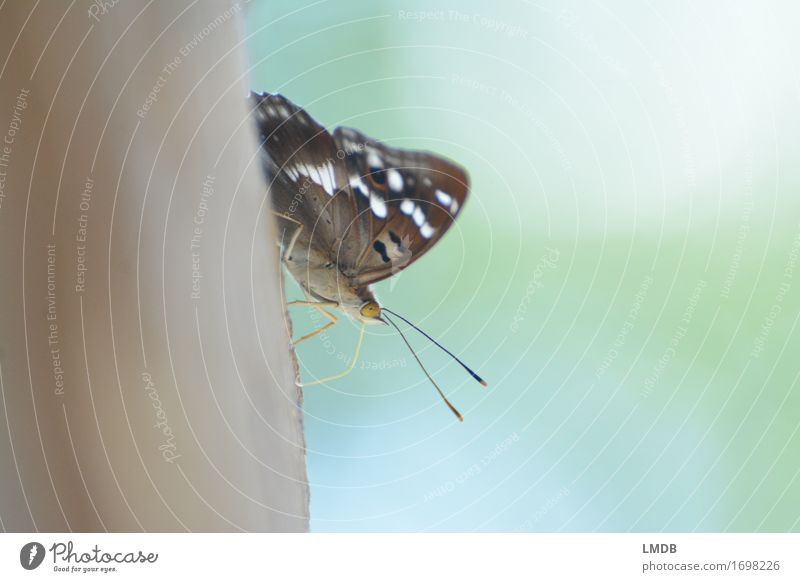 Butterfly with open air Animal Wing 1 Brown Insect Feeler Sit Calm Peaceful Delicate Point Start position Colour photo Exterior shot Detail Copy Space left