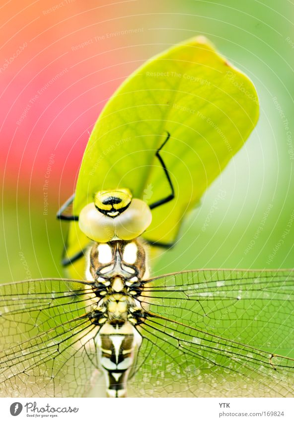 Nature Beautiful Green Plant Red Leaf Animal Grass Warmth Elegant Esthetic Wing Macro (Extreme close-up) Observe Wild Fantastic