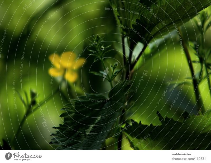 Dream in green Colour photo Exterior shot Close-up Abstract Deserted Copy Space left Copy Space top Day Shadow Contrast Shallow depth of field Plant Flower Leaf