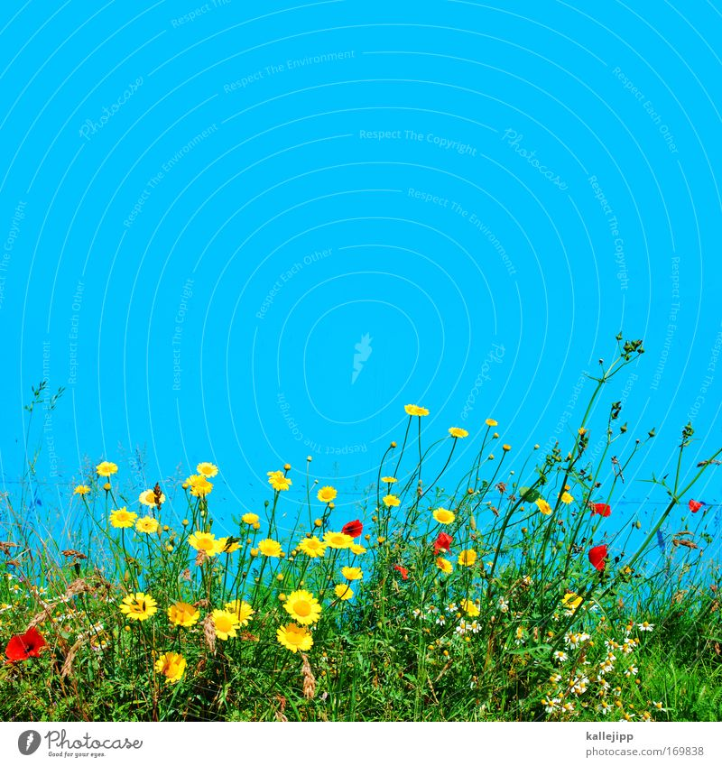 a blue wall doesn't make a summer yet Colour photo Multicoloured Exterior shot Day Contrast Sunlight Environment Nature Landscape Plant Animal Air Sky Climate