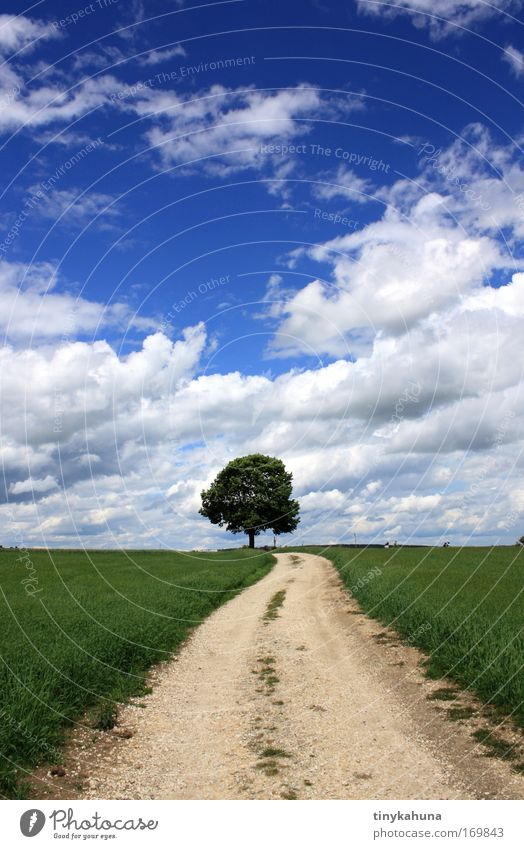 Nature Sky Tree Sun Summer Clouds Loneliness Animal Relaxation Spring Freedom Landscape Air Bright Field