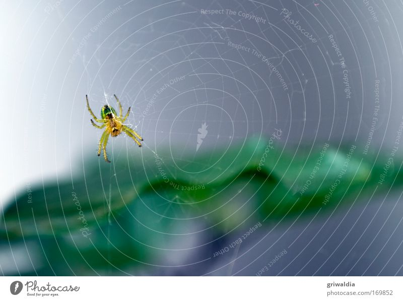 Green Plant Summer Animal Yellow Wait Environment Network Net Observe Wild animal Hunting Hang 8 Spider Crawl