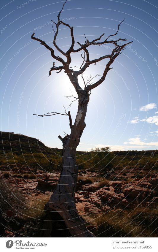 Tree Sun Calm Loneliness Warmth Desert Wanderlust