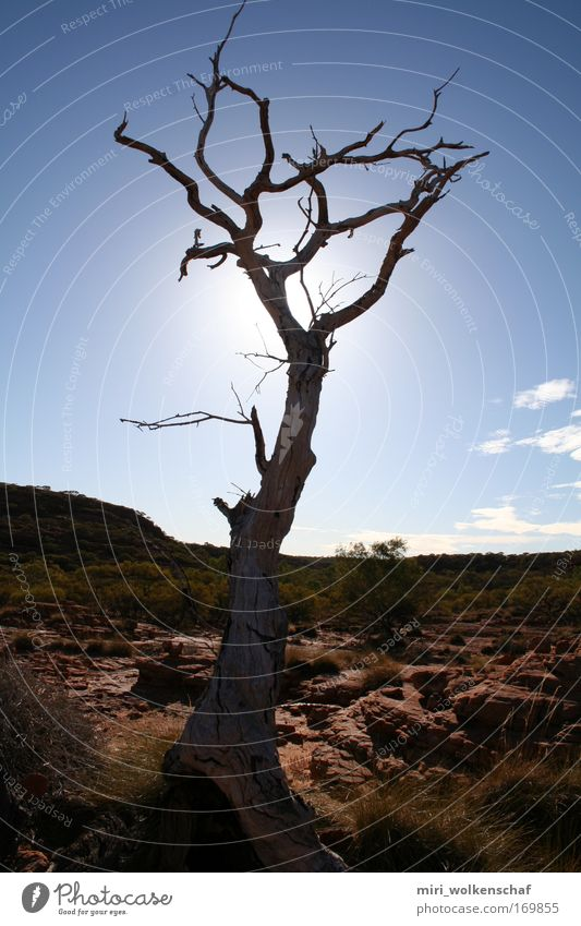 Tree Sun Calm Loneliness Warmth Desert Wanderlust