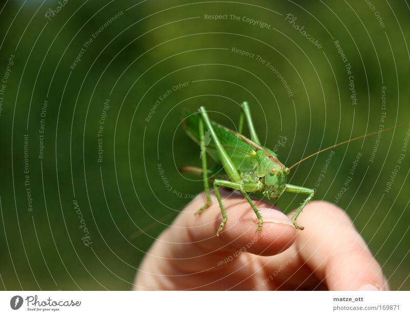 Hand Green Animal Animal face Locust