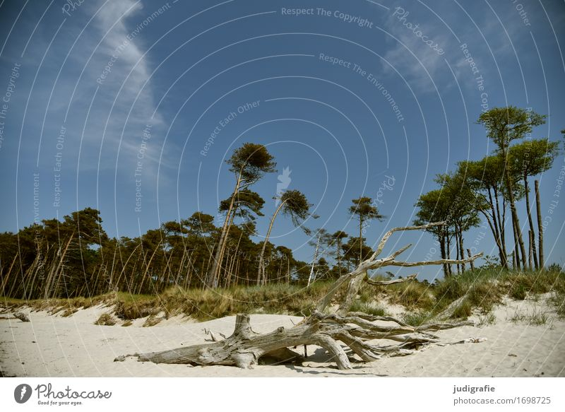 western beach Environment Nature Landscape Plant Sky Cloudless sky Climate Beautiful weather Tree Forest Coast Beach Baltic Sea Western Beach Darss