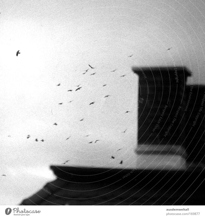 Birds Black & white photo Exterior shot Deserted Day Blur House (Residential Structure) Sky Autumn Weather Bad weather Wind Leipzig Animal Wing Group of animals