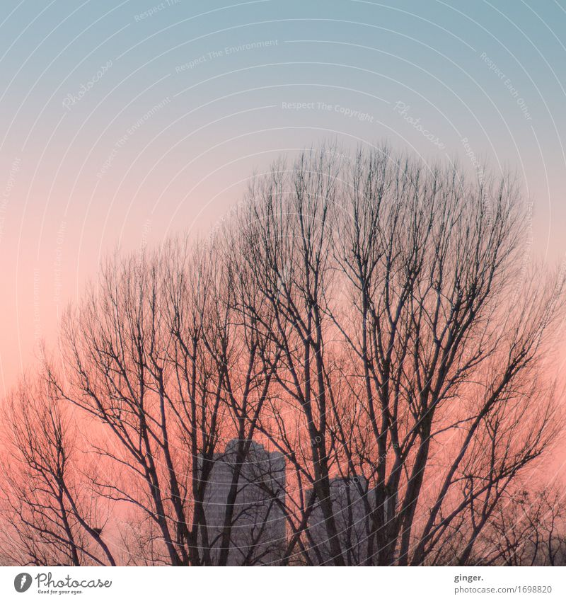 Sky City Blue Tree Calm Environment Autumn Pink Park High-rise Branch Beautiful weather Soft Cloudless sky Story Dusk