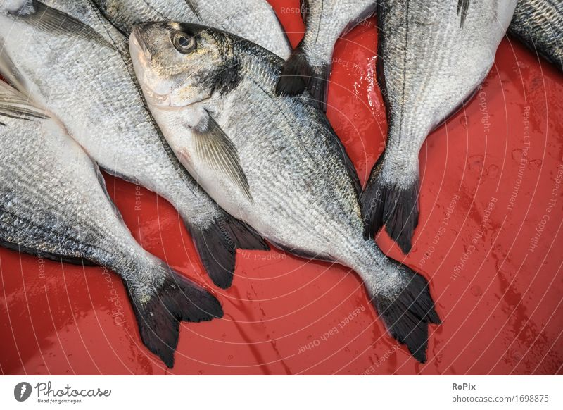 FiSH Food Fish Seafood Nutrition Diet Fishing (Angle) Vacation & Travel Sightseeing City trip Fisherman fish trade Environment Nature Wild animal Shopping Catch