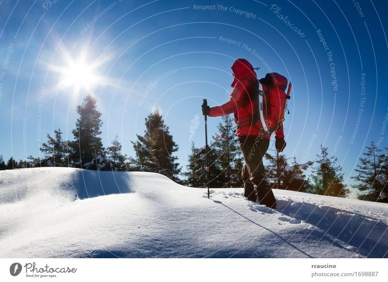 Winter hiking. Relaxation Vacation & Travel Trip Adventure Freedom Expedition Snow Mountain Sports Human being Man Adults Nature Landscape Sky Tree Forest