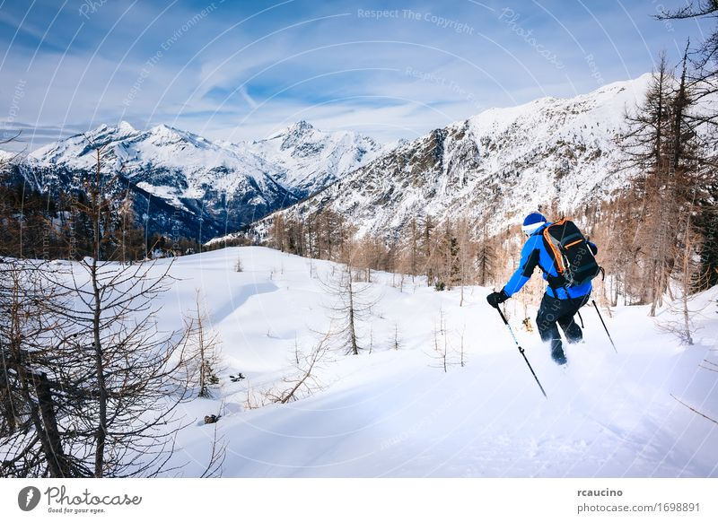 Winter sport: man skiing in powder snow Human being Sky Nature Vacation & Travel Man Blue White Tree Landscape Relaxation Joy Forest Mountain Adults Sports