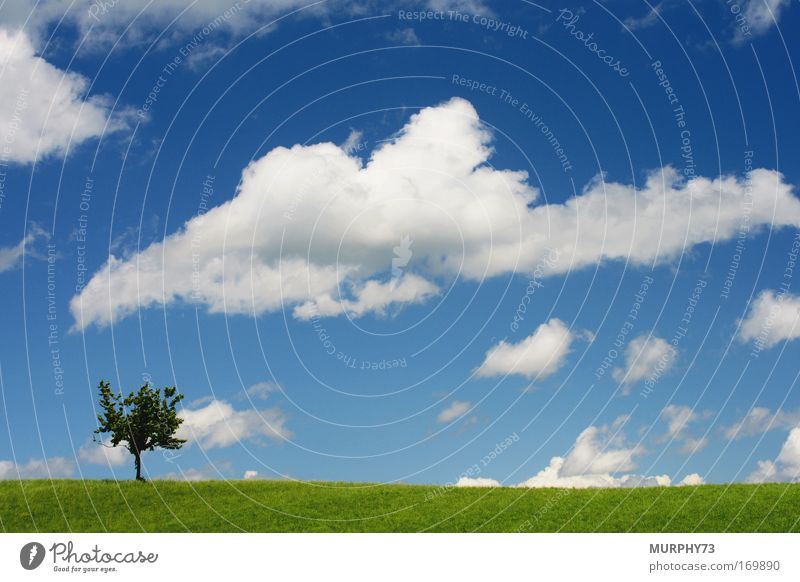 Nature Sky White Tree Green Blue Plant Clouds Meadow Emotions Grass Spring Landscape Bright Weather Environment