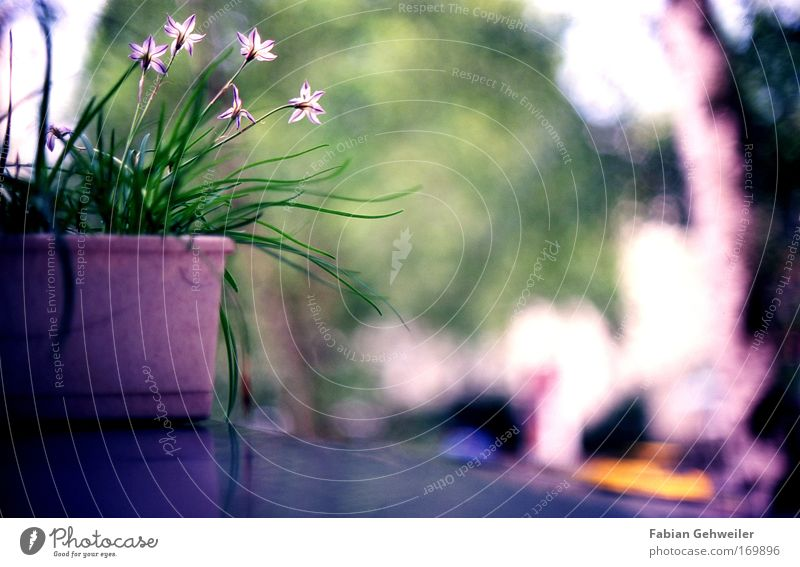 Nature Blue Green Beautiful Plant Summer Flower Calm Relaxation Environment Blossom Garden Flat (apartment) Esthetic Violet Beautiful weather